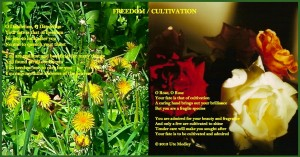 Freedom / Cultivation Poem